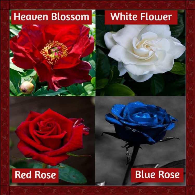 661665719_gatheringflowers.thumb.jpg.96fcb53692d2b08b2dfe48616af15fa3.jpg
